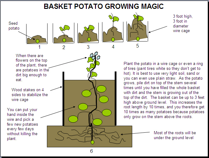 How To Grow Potatoes In A Container | 101 Ways To Survive