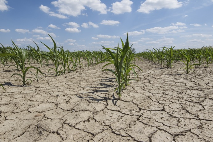 dry-drought-farmland